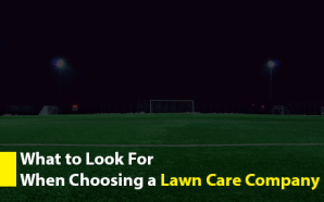 What to Look For When Choosing a Lawn Care Company
