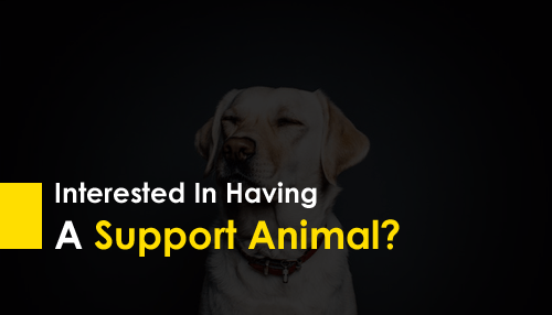 Interested In Having A Support Animal?