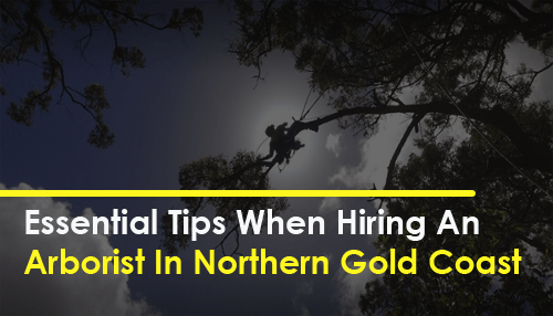 Essential Tips When Hiring An Arborist In Northern Gold Coast