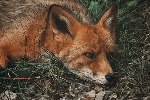 Benefits of Hiring a Wildlife Specialist