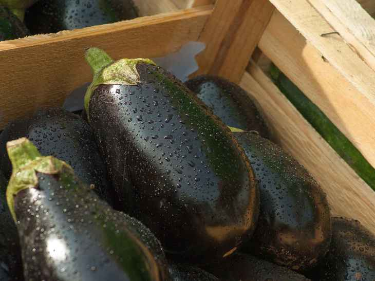 Eggplant market vegetables food | Fruits and Veggies That Can Keep You Hydrated