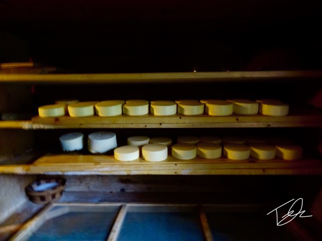 Homemade Cheese Wheels Shelved in Switzerland