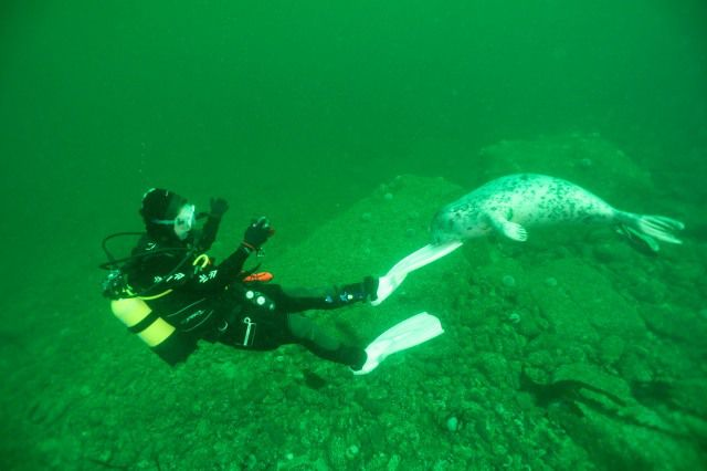 Fin seal