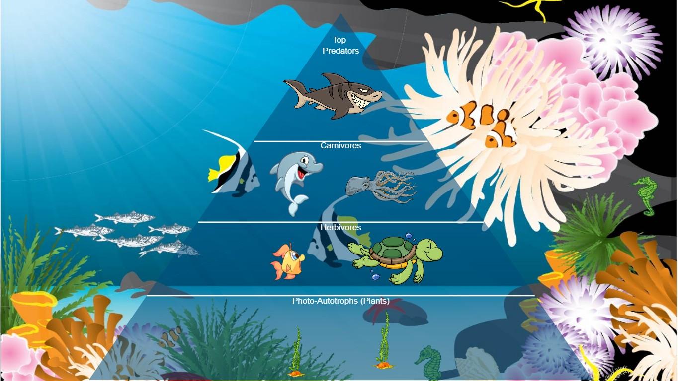 The Ocean Food Chain