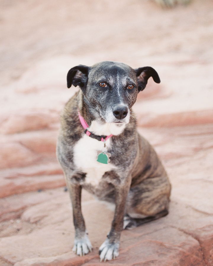 pet portrait during Valley of Fire engagement session