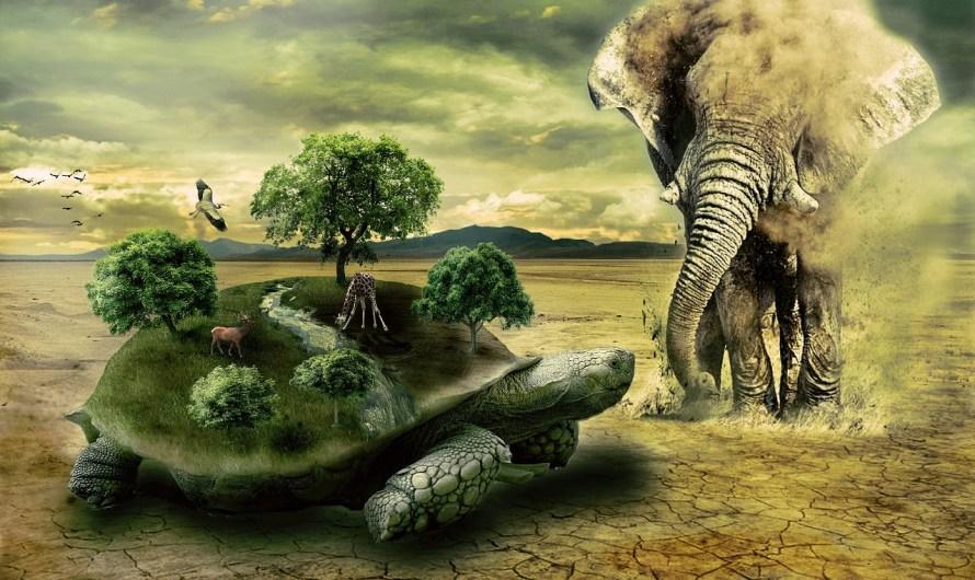 انواع الحيوانات: الحيوانات الفقارية واللافقاريات