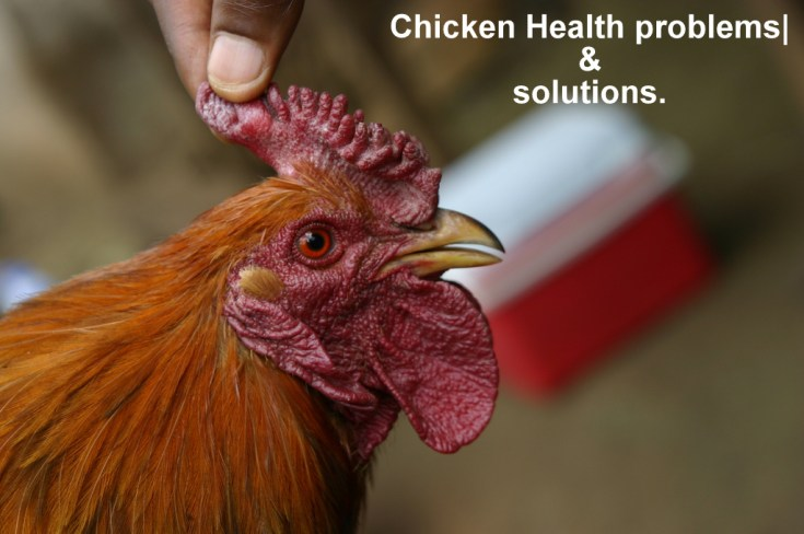 Chicken eye problems