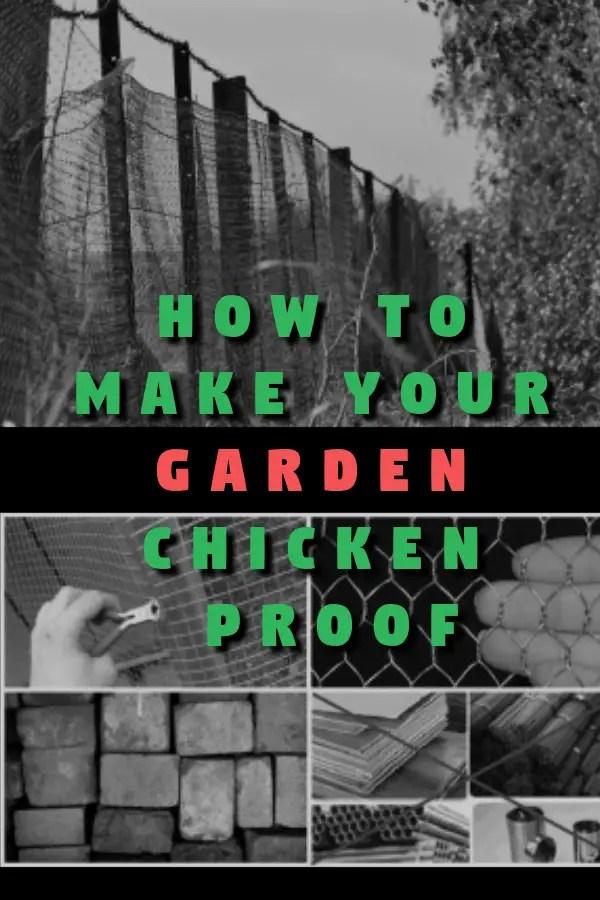 How to Make Your Garden Chicken Proof & 5 DIY TRICKS!