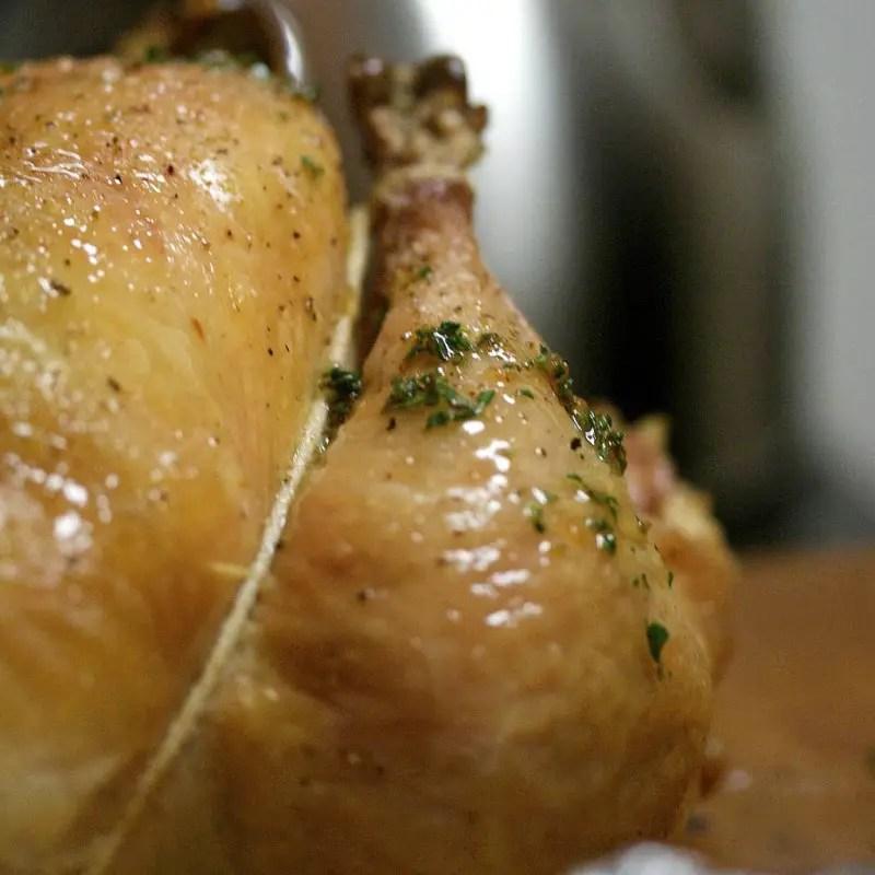 best meat chicken breeds