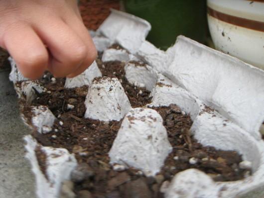 egg carton use
