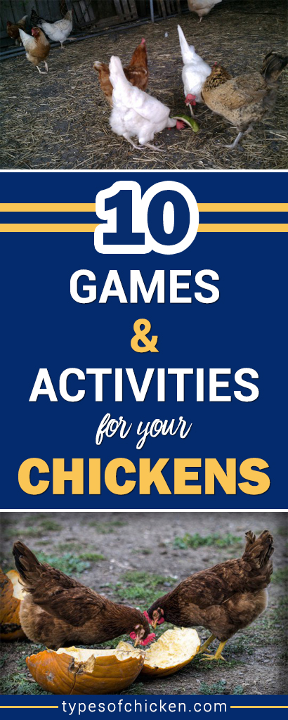 Games and Activities For Your Chickens