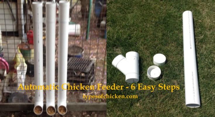 Automatic Chicken Feeder