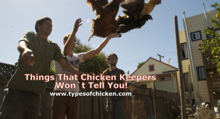 Things That Chicken Keepers Won`t Tell You!