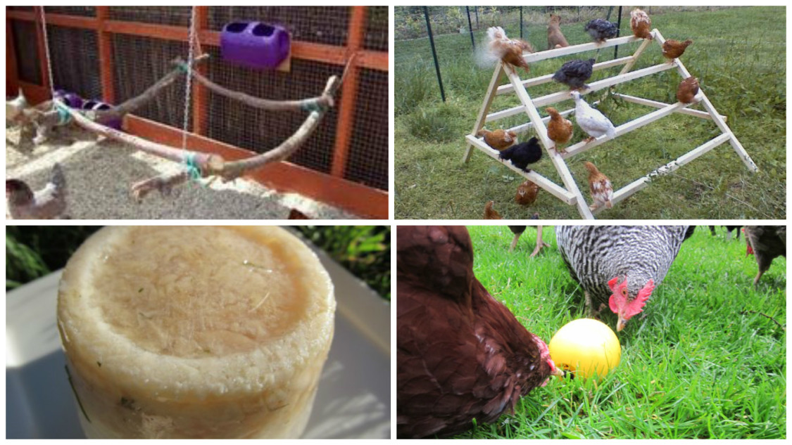 How to Keep Your Chickens Entertained & 3 DIY Toys! - Part 2