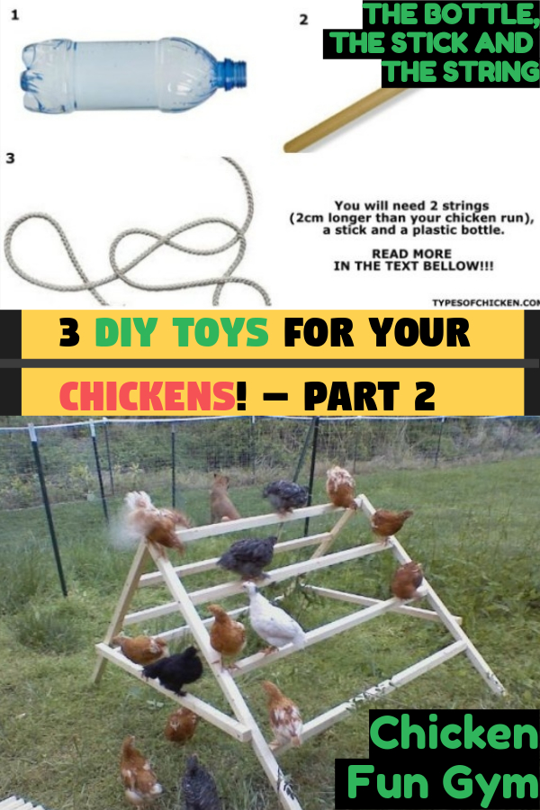 How to Keep Your Chickens Entertained & 3 DIY Toys! – Part 2
