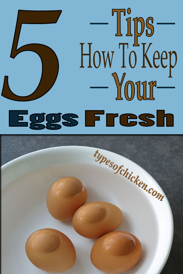 Is It Safe To Keep Eggs At Room Temperature