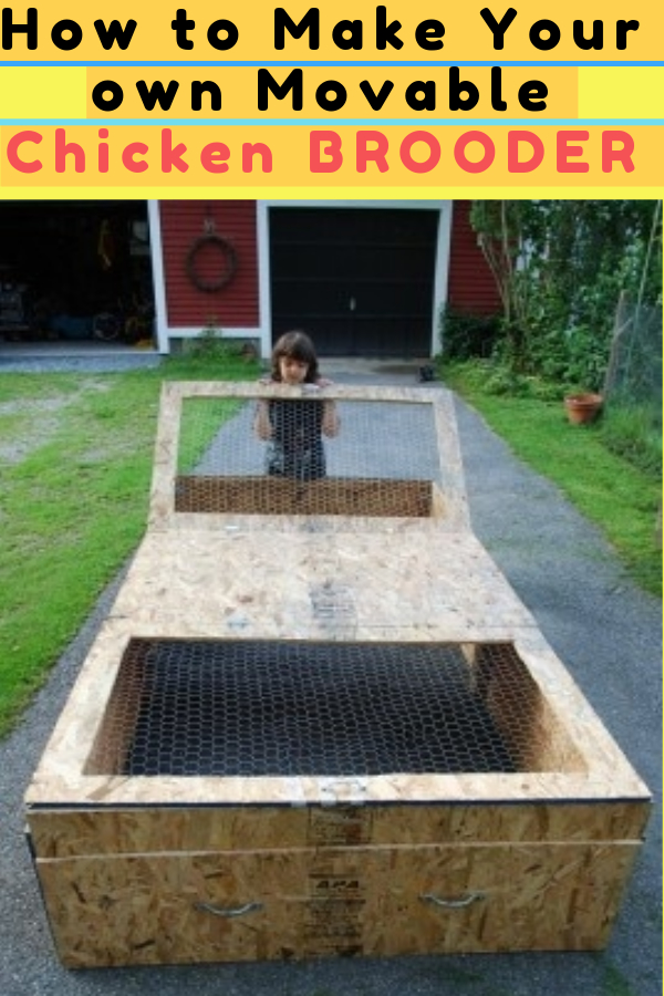 How to Make Your own Movable Chicken BROODER – DIY Project!