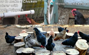 Improve Your Chicken Coop