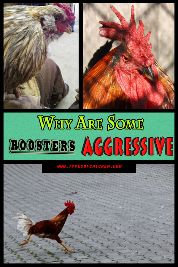 Why Are Some Plants Rare Look To Their Ability To Adapt: Why Are Some Roosters Aggressive?