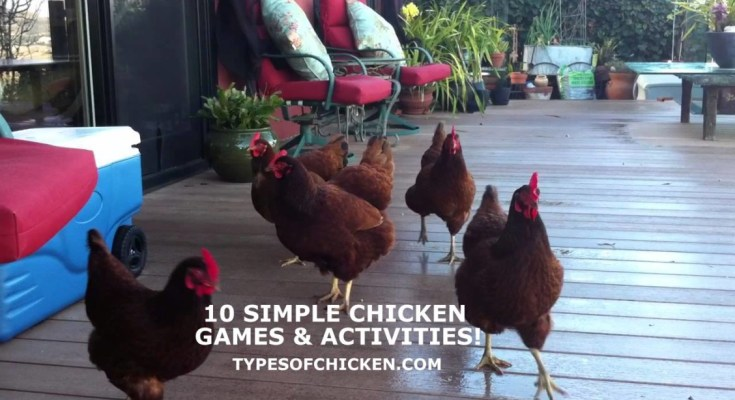 chicken games