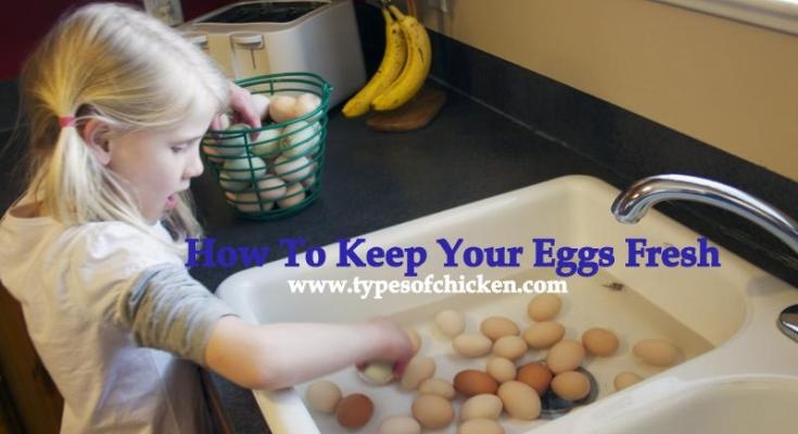 How To Keep Your Eggs Fresh