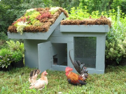 Amazing Chicken Coop