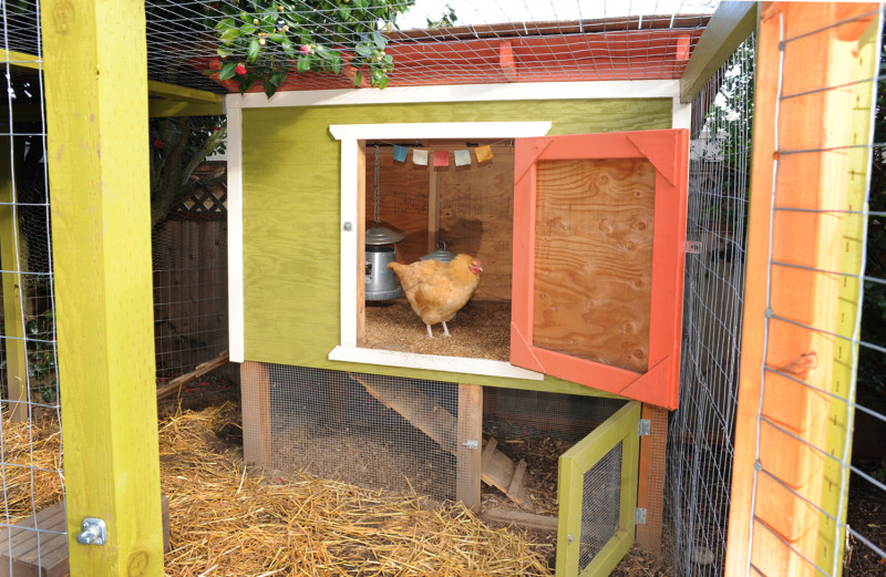 Cleaning Your Chicken Coop With Vinegar