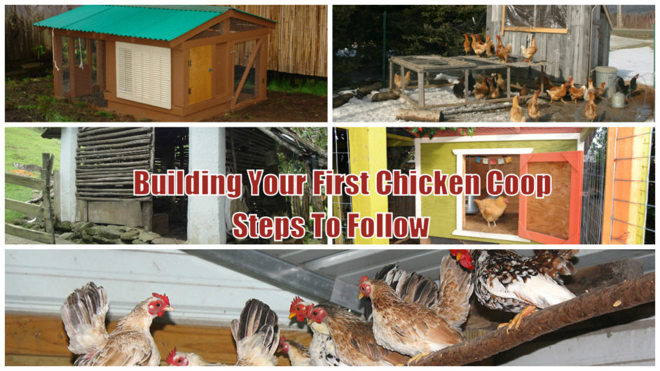 Things you need to know before building your first chicken - What to know before building a house ...