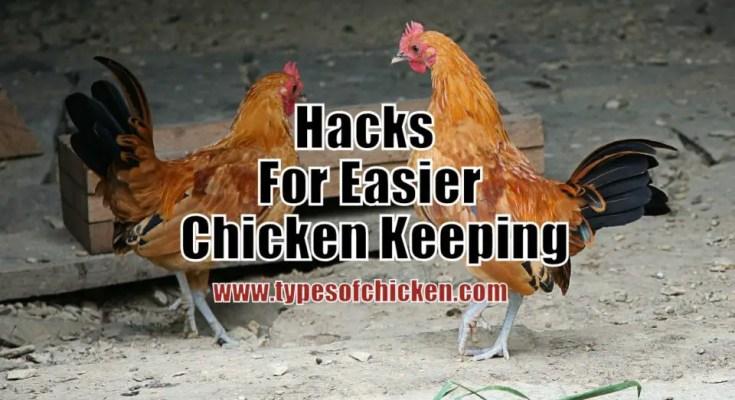Hacks For Easier Chicken Keeping