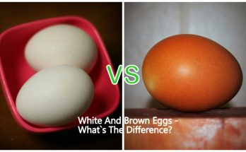 White And Brown Eggs - What`s The Difference