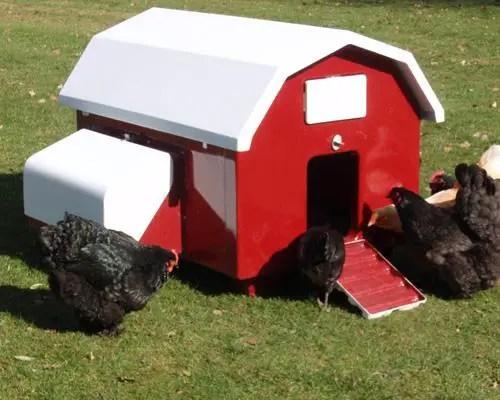 urban-chicken-coop-4