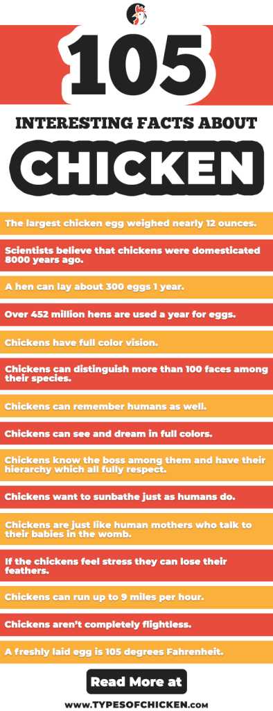 105 Surprising Facts About Chickens