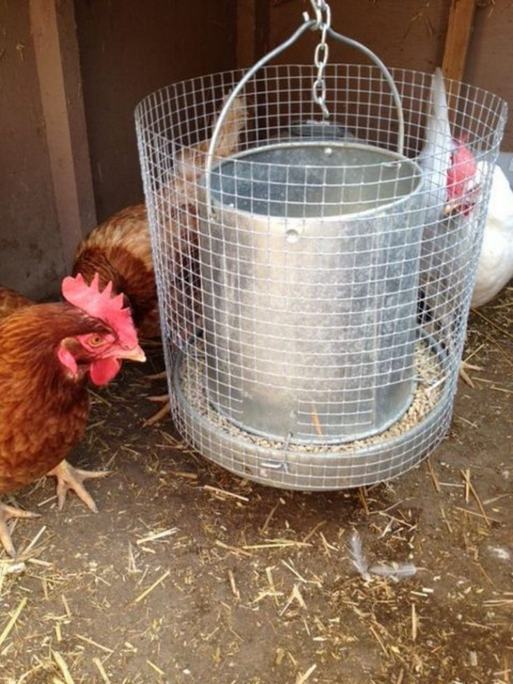 Goat Proof Chicken Feeder Solution