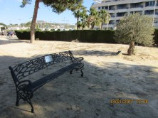 Bench placed near the Olive tree in memory of Pamela Kershaw
