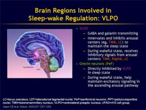 brain_sleep wake state