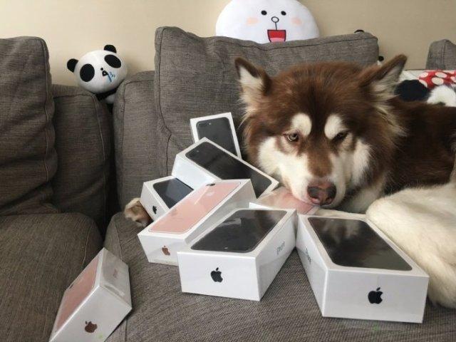 dog-iphone-7