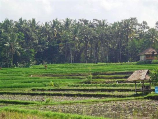 TJUB266 - Land for sale in Ubud Bali 01