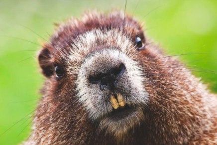 """Ubuntu 18.04 LTS se llamará """"Bionic Beaver"""""""