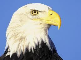 cap de vultur