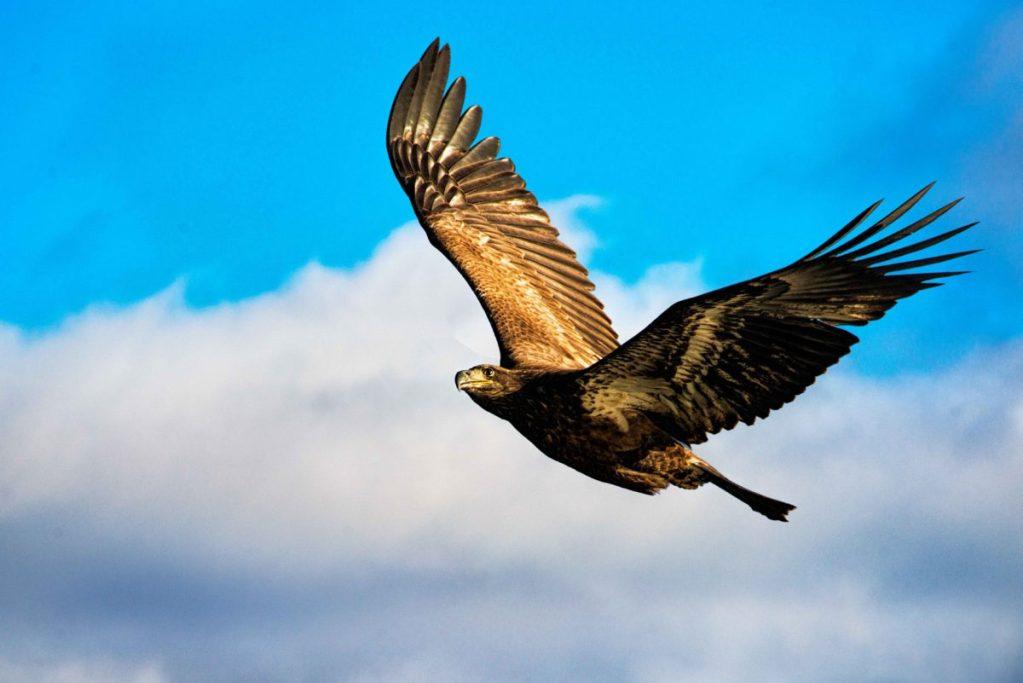 vultur-3