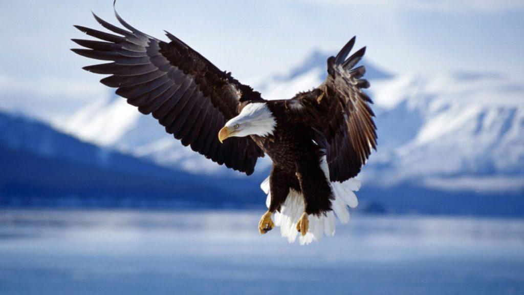 vultur-4