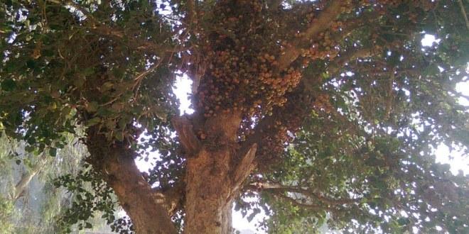 كشافة البيئة أطلقت فعاليات أسبوع الشجرة واليوم العالمي للتطوع