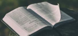 """إنجيل اليوم: """"لَمْ يَقُمْ في مَواليدِ النِّسَاءِ أَعْظَمُ مِنْ يُوحَنَّا المَعْمَدَان…"""""""