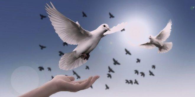 صدور موضوع رسالة البابا فرنسيس لمناسبة اليوم العالمي للسلام ٢٠١۹