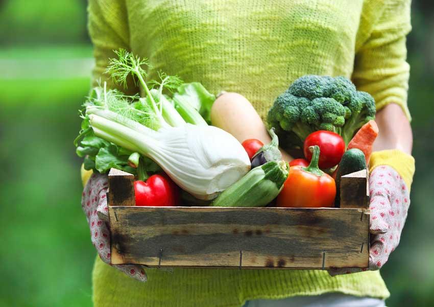 vesicula biliar dieta pos postoperatoria