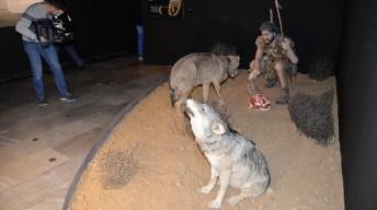 Visita a la exposición 'La caza: un desafío en evolución', del IREC. © Gabinete de Comunicación UCLM