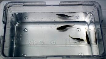 Las autoridades han conocido el trabajo investigador que se lleva a cabo en la UCLM © Gabinete de Comunicación UCLM