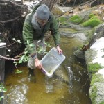 Tadpole Release to Bolster Endangered Population