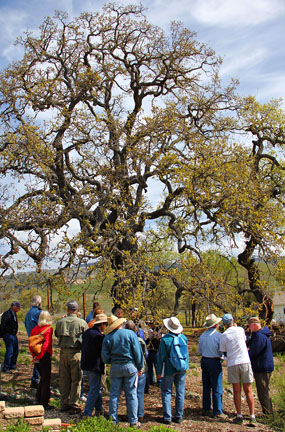 Sedgwick docents gather for phenology training