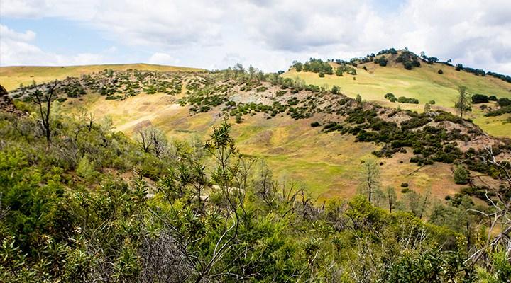 McLaughlin Natural Reserve